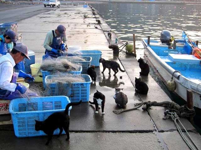 Gatos y pescadores en Tashirojima