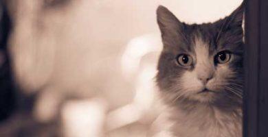como calcular la edad Humana de un gato
