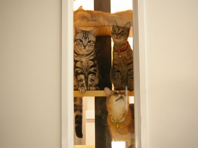 diseño cats desing