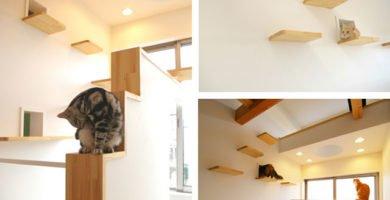 Gatos en la cats house