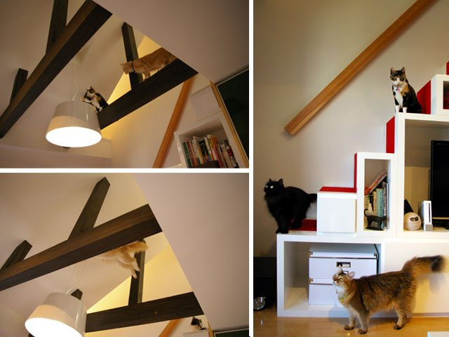 diseño cats house