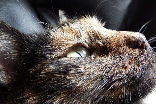 color-gatos-carey