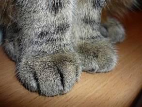 Patitas de un gato