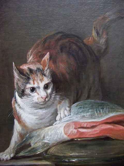 gato posando junto a un salmón
