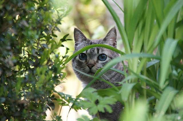 La Inteligencia de los Gatos