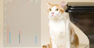 App que permite la identificación y control en la alimentación de los gatos por reconocimiento facial