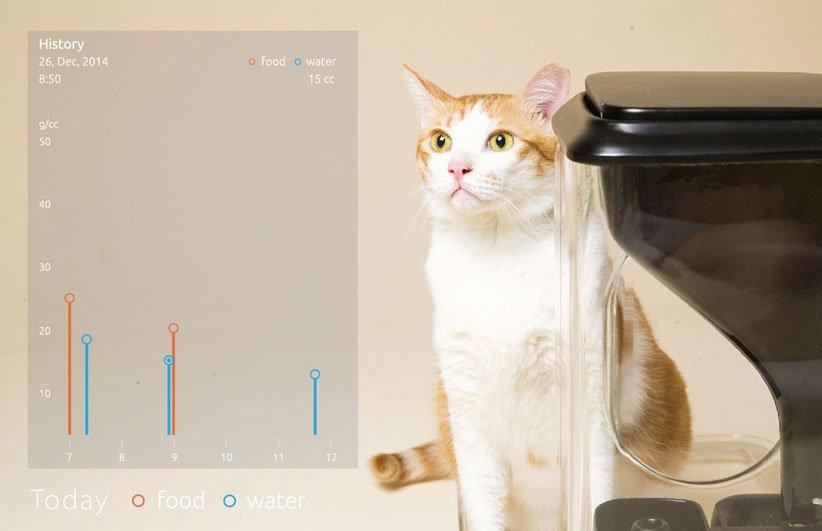 """""""Bistro"""" o el Control de las Colonias Felinas en una App"""