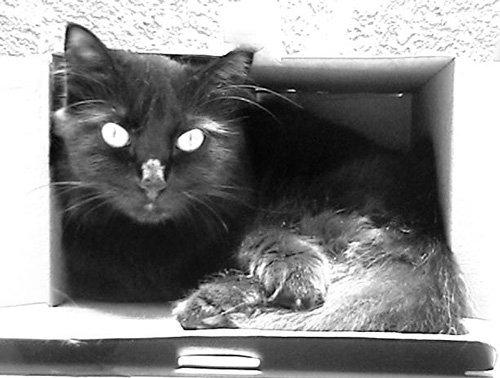 Niga, la gata descansa en su caja de cartón