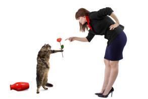 Gatos y comunicación