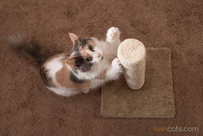 un gato se rasca y juega