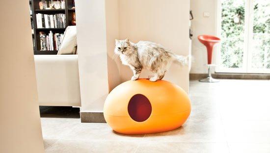 gato persa en arenero naranja subido