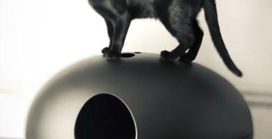 gato negro encima de un arenero