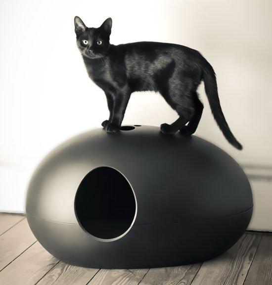 Un Arenero para Gatos muy Original