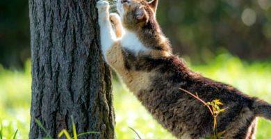 rascadores-necesarios-gatos
