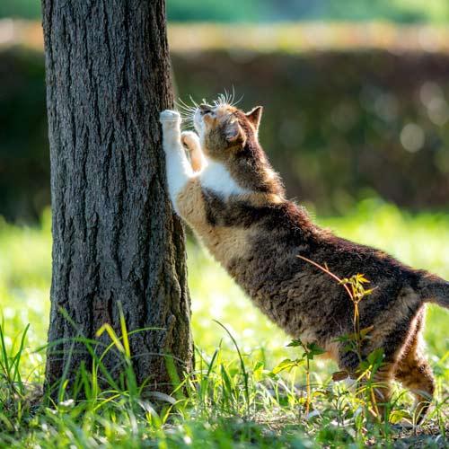 Rascadores para gatos ¿cuál elijo?¿por qué son necesarios?