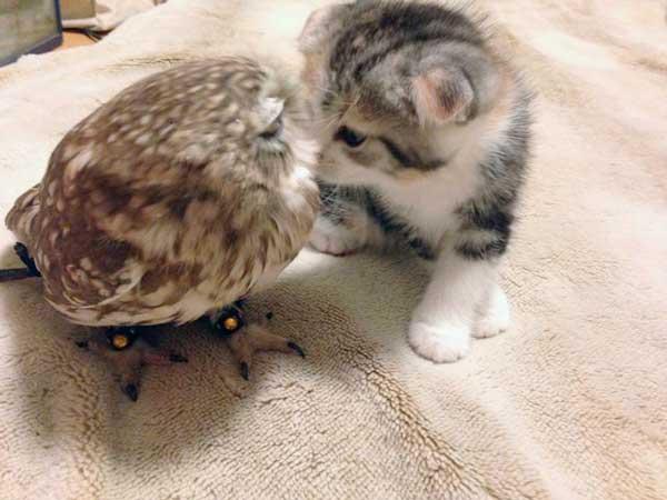 gatito y buho juntos