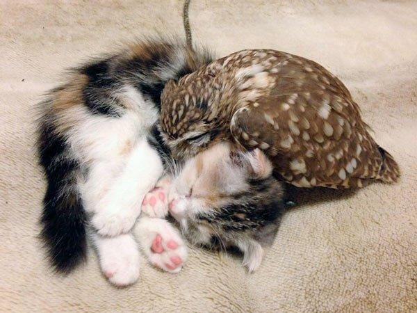 buho y gato durmiendo
