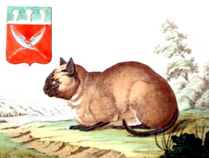 gato-siames-dibujo-peter-simon-pallas