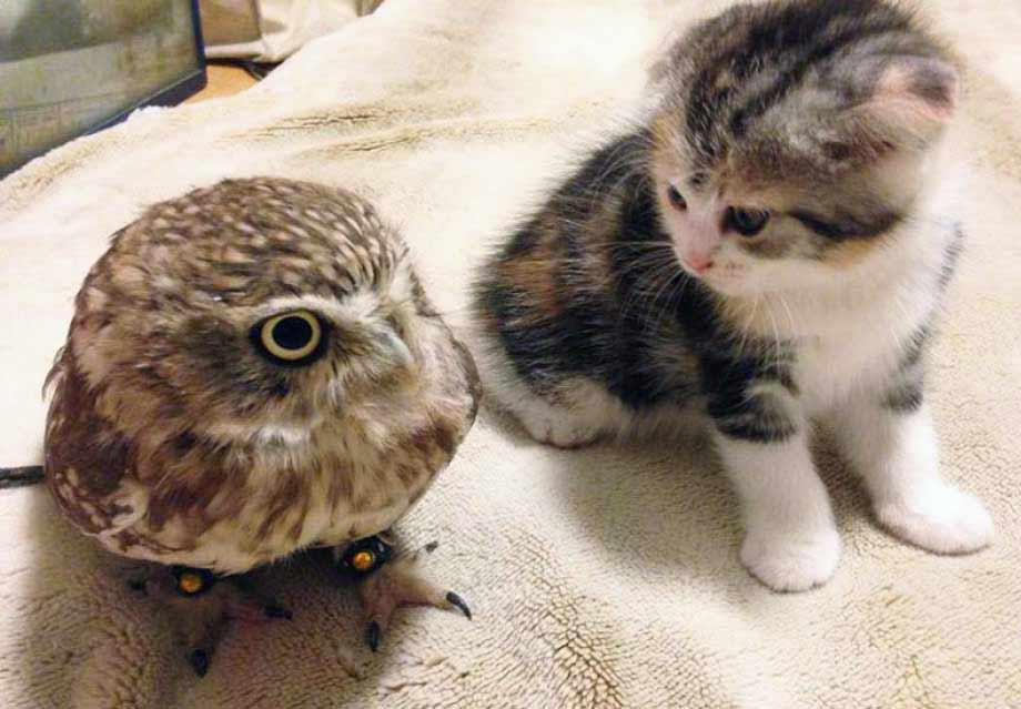 Cuando Un Gato Y Un Búho Son Amigos Feelcats Blog
