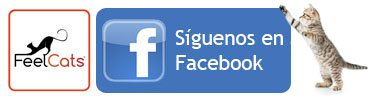 seguir-feelcats-facebook