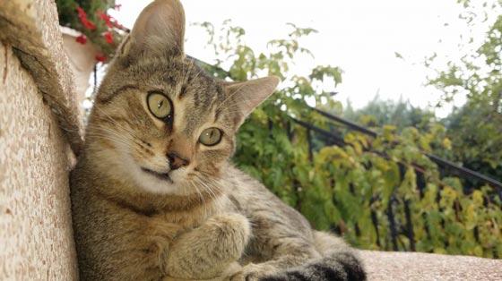 fotos-de-gatos-feelcats-concurso-001