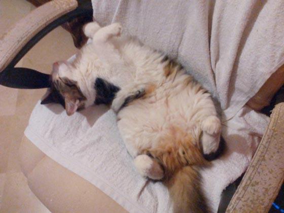 fotos-de-gatos-feelcats-concurso-003