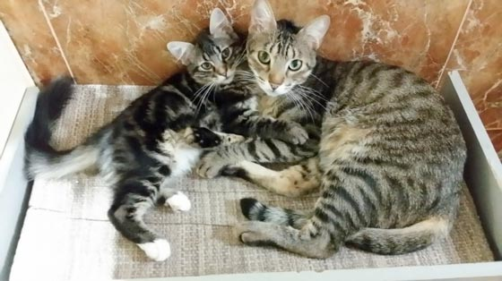 fotos-de-gatos-feelcats-concurso-005