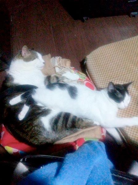 fotos-de-gatos-feelcats-concurso-006