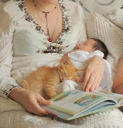 fotos-de-gatos-feelcats-concurso-009
