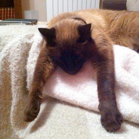 fotos-de-gatos-feelcats-concurso-010