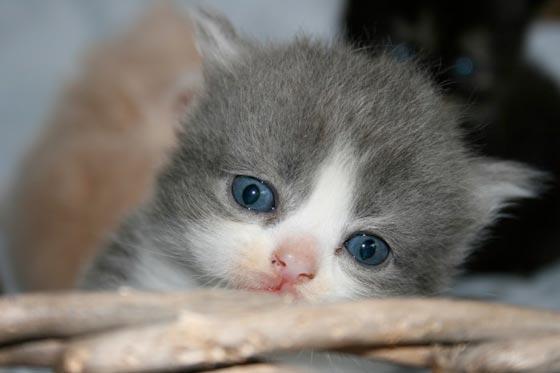 fotos-de-gatos-feelcats-concurso-011