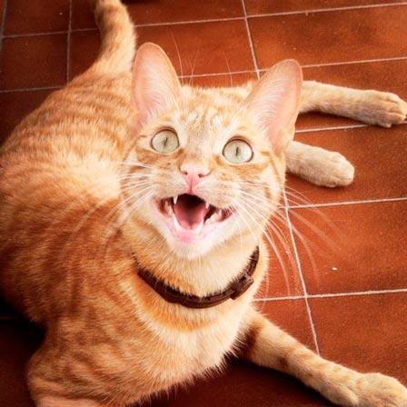 fotos-de-gatos-feelcats-concurso-012