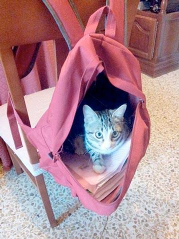 fotos-de-gatos-feelcats-concurso-013