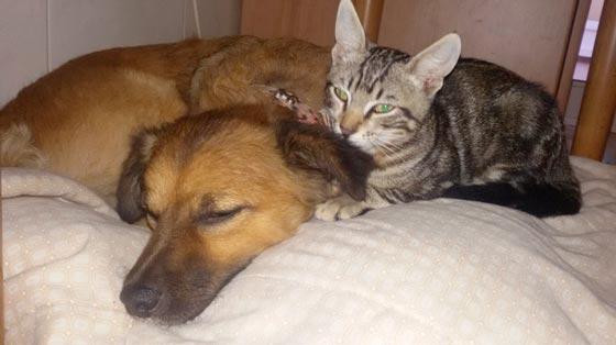 fotos-de-gatos-feelcats-concurso-014