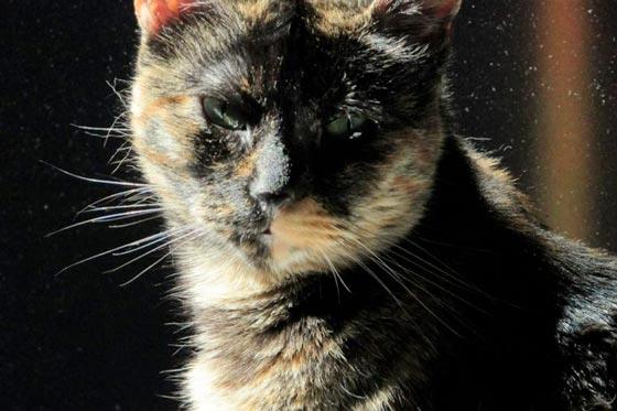 fotos-de-gatos-feelcats-concurso-017