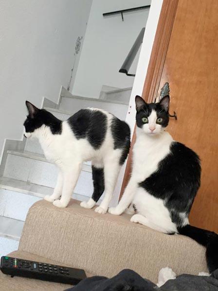 fotos-de-gatos-feelcats-concurso-019