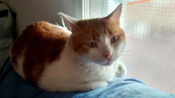 fotos-de-gatos-feelcats-concurso-020