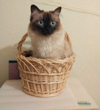 fotos-de-gatos-feelcats-concurso-021