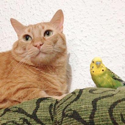 fotos-de-gatos-feelcats-concurso-025