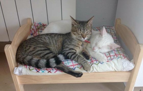 fotos-de-gatos-feelcats-concurso-028