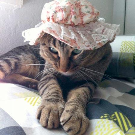 fotos-de-gatos-feelcats-concurso-031