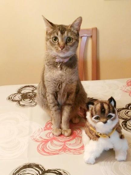 fotos-de-gatos-feelcats-concurso-032