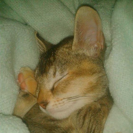 fotos-de-gatos-feelcats-concurso-033