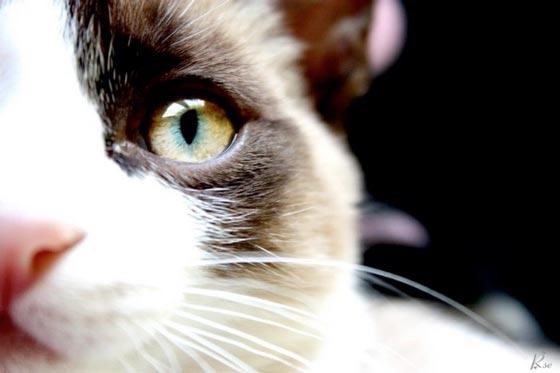 fotos-de-gatos-feelcats-concurso-036