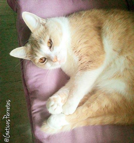 fotos-de-gatos-feelcats-concurso-037