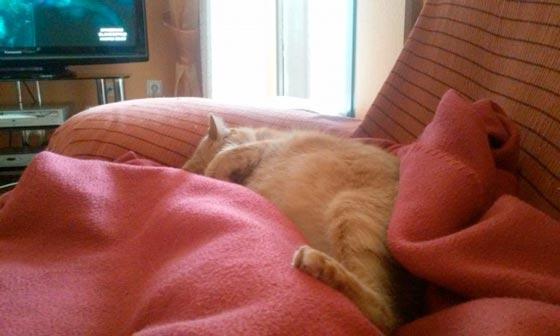 fotos-de-gatos-feelcats-concurso-040