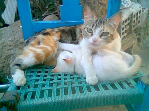 fotos-de-gatos-feelcats-concurso-041