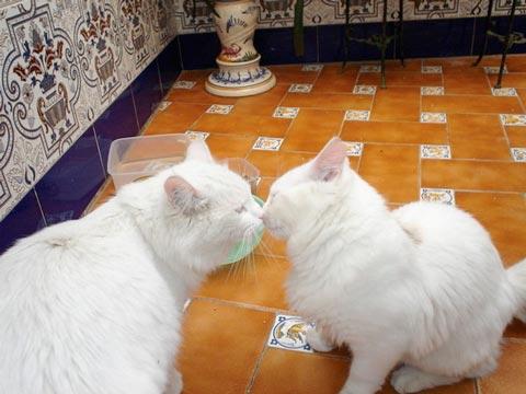 fotos-de-gatos-feelcats-concurso-042