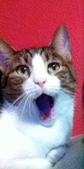 fotos-de-gatos-feelcats-concurso-044