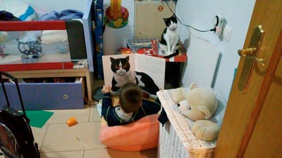 fotos-de-gatos-feelcats-concurso-045